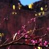 28_deer_creek_redbud_tree.jpg